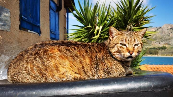 Οι γάτες μπορούν να κολλήσουν κορονοϊό από τους ανθρώπους, επιβεβαιώνει έρευνα